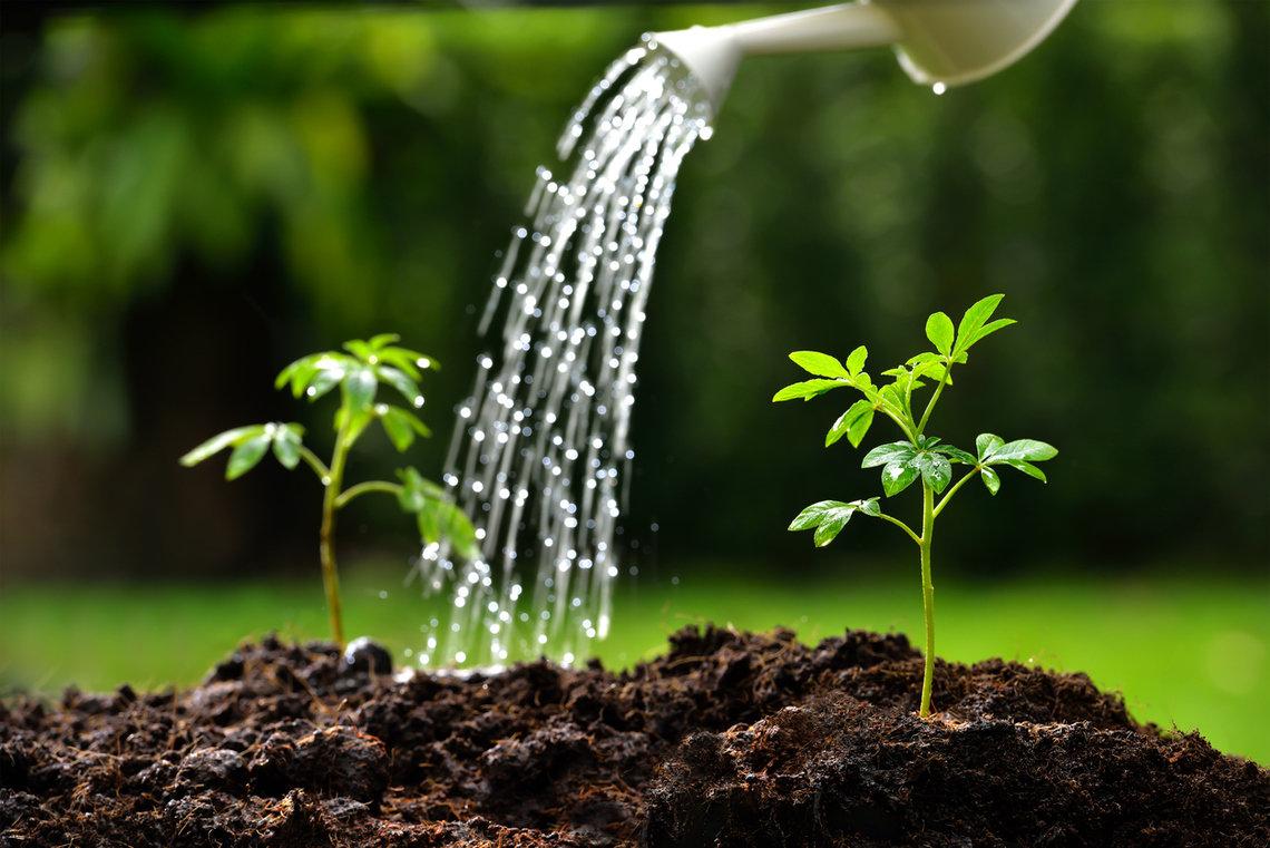 растениям нужна вода в картинках ларина