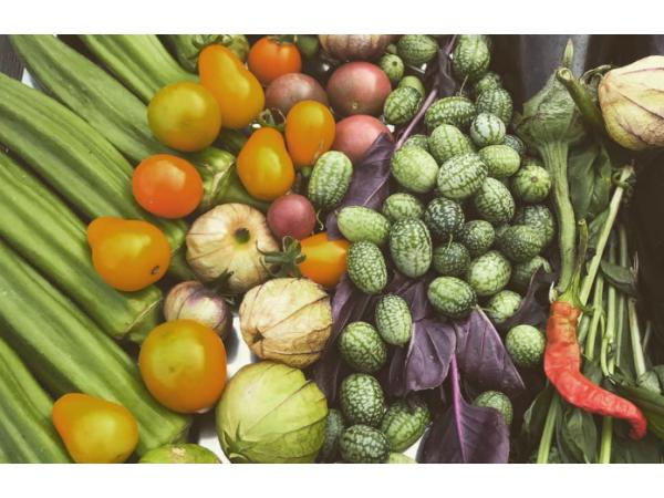 Україна переходить на екзотичні овочі Рис.2