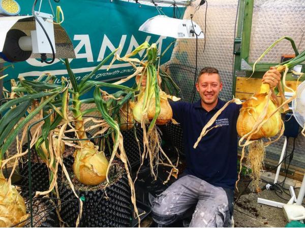 Фермер виростив гігантську цибулю завбільшки з 2 людські голови Рис.3