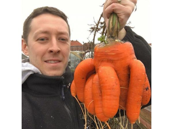 Фермер виростив гігантську цибулю завбільшки з 2 людські голови Рис.9