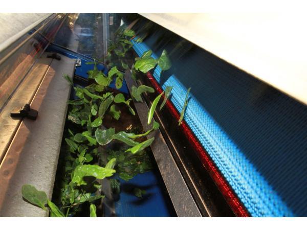 Bellavista перша в світі машину для збирання і сортування салатів бебі-ліф Рис.5