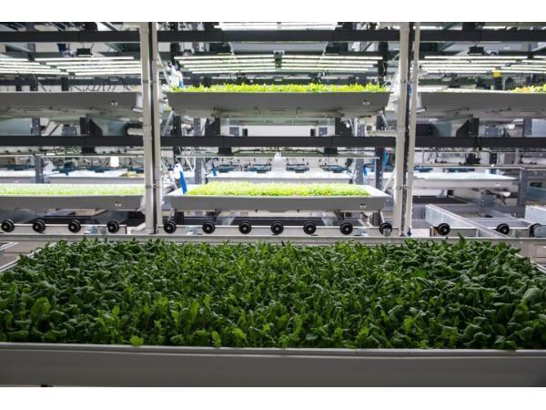 Киберфермерство: як штучне м'ясо і вертикальні ферми захоплюють світ Рис.6