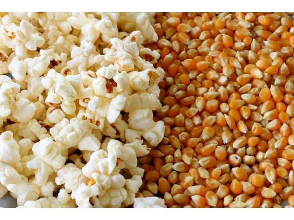 кукурудза для попкорна