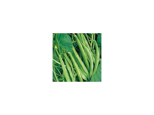 квасоля овочева