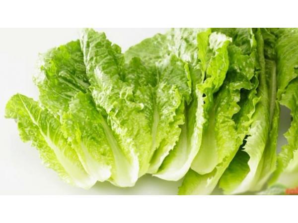 Салат посівний листковий Рис.3