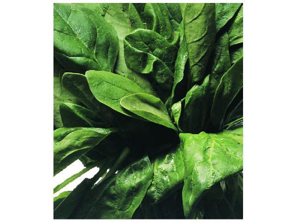 шпинат городній