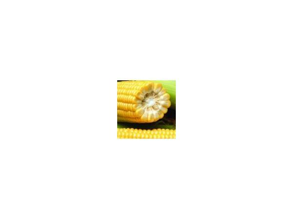 Кукурудза Інгульський
