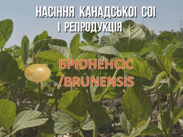 Брюненсіс Рис.1