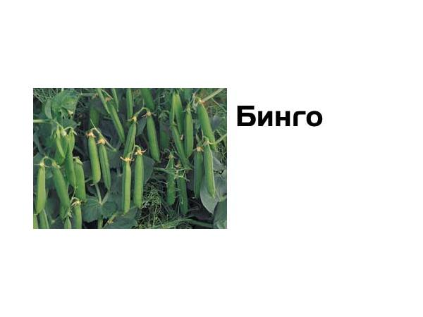 Бінго Рис.1