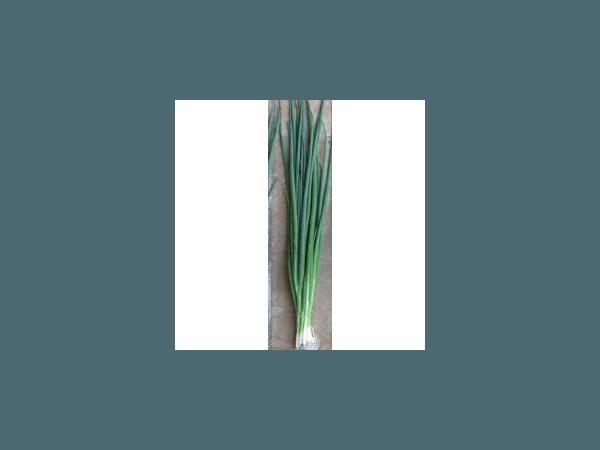 Лонг Уайт Кошигая Рис.1