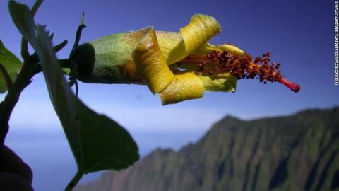 Безпілотник зміг виявити квітку, яку вважали вимерлою. Рис.1