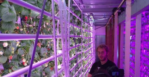 Французький стартап створює вертикальні ферми для вирощування полуниць Рис.1