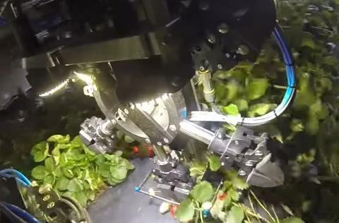 У США створили роботів для збору полуниці Рис.1
