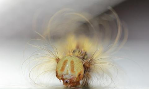 Відкрито новий метод визначення статі метеликів Рис.1