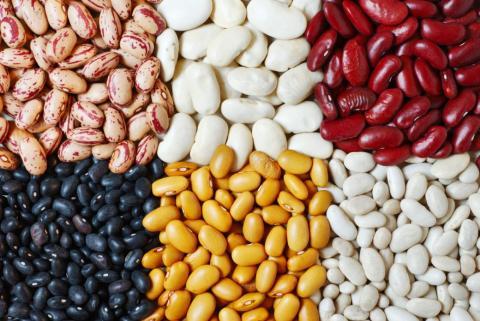 Агролідер пропонує фермерам партнерську програму з вирощування квасолі Рис.1