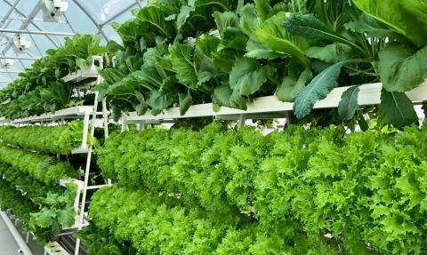 AQUAFARM виростила українські салати за технологією аквапоніки Рис.1