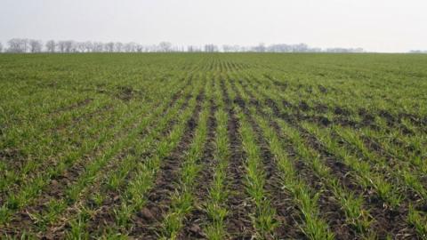 Посівна-2019: В Україні засіяно 6,3 млн га ярих зернових культур Рис.1