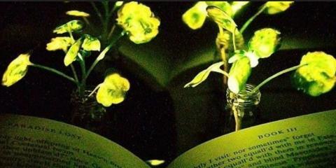У MIT створили «квіти-світлячки» для освітлення будинків майбутнього Рис.1