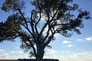 У США вчені створили дерева які очищають повітря Рис.1