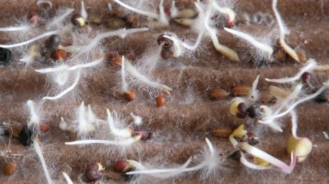 Біологи виявили «торгові відносини» між рослинами і грибами Рис.1