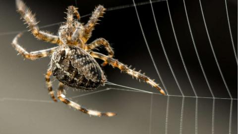 Розшифровано ген - павуковий клей зможе стати екологічно чистою заміною пестицидів Рис.1