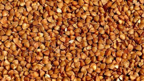 В Україні очікується рекордно низький урожай гречки Рис.1