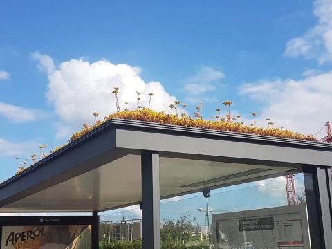 Для бджіл: у Нідерландах дахи автобусних зупинок засадили квітами Рис.1