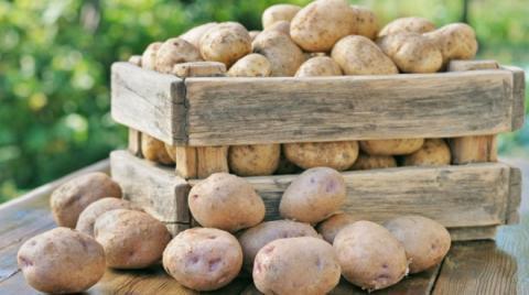 Перед початком зберігання картоплю слід обробляти біопрепаратами Рис.1