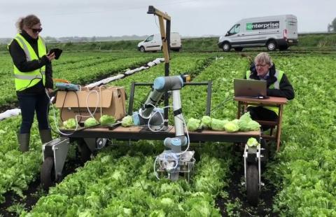 Робота навчили розпізнавати та акуратно збирати з грядки дозрілий салат Рис.1