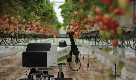 Роботи-фотоніки витрачають на збір суниці менше 7 днів Рис.1