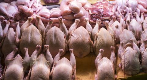 Швейцарська компанія розробила штучну курятину з гороху Рис.1