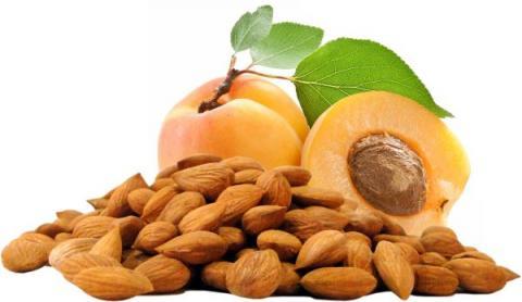 У Таджикистані організували промислову переробку абрикосових ядер Рис.1