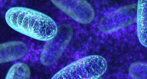 Вчені вперше відредагували мітохондріальну ДНК рослин Рис.1