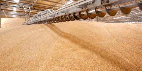 Філії ДПЗКУ прийняли на зберігання перші півмільйона тонн зернових Рис.1