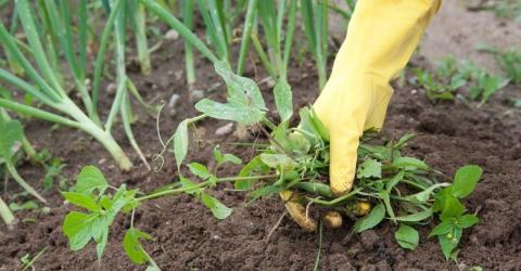 Канадський фермер створює парову машину нового покоління для знищення бур'янів Рис.1