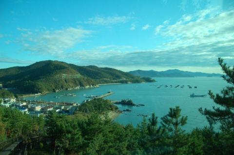 На острові Хайнань з'явиться плантація з вирощування морського рису Рис.1