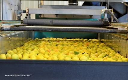 На ринку з'явилась нова технологія безводного очищення агропродукції Рис.1