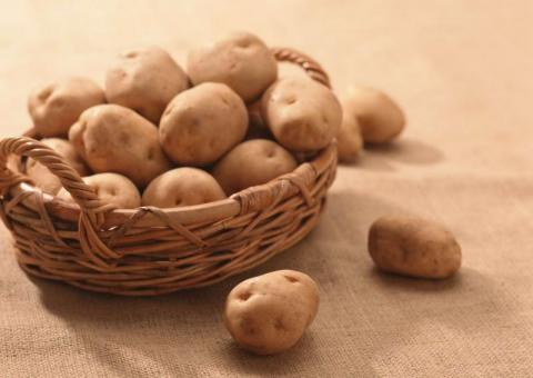 На Волині презентували нові сорти картоплі Рис.1