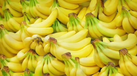 «Панамська хвороба» поширилася на 175 га бананових плантацій Колумбії Рис.1
