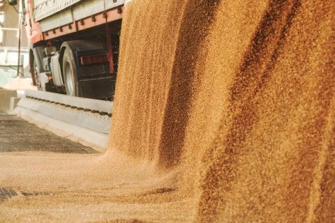 Представлено калькулятор розрахунку втрат зерна та продуктів його переробки при зберіганні за новим законодавством Рис.1