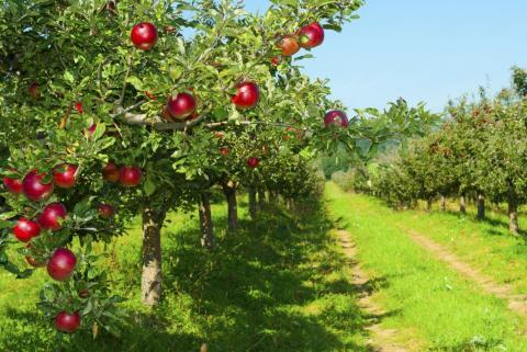 114 млн грн компенсації отримали аграрії за садивний матеріал Рис.1