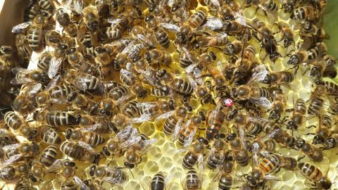 За отруєння бджіл пестицидами пропонують запровадити штрафи та кримінальну відповідальність Рис.1