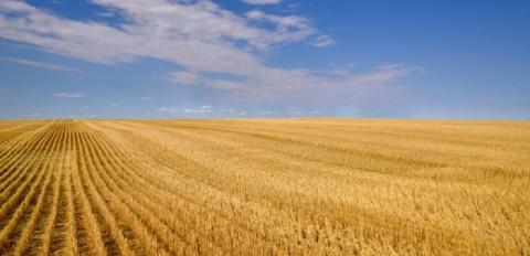 Жнива-2019: В Україні зібрано 42,4 млн тонн зерна Рис.1