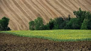 Аграрні держпідприємства передали під контроль Мінекономіки Рис.1