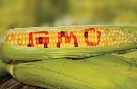 ГМО-рослини виявилися корисними для людей Рис.1