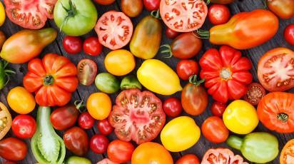 Іспанські фермери-органіки вирощують понад 120 сортів томатів Рис.1