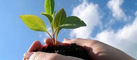 В Україні зростає попит на біопрепарати для захисту рослин Рис.1
