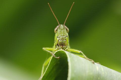 Вчені: рослини вміють спілкуватися один з одним у разі небезпеки Рис.1
