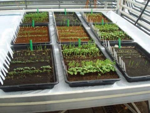 Вчені виростили культурні рослини на «марсіанському» і «місячному» грунті Рис.1