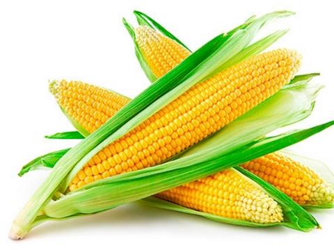 Жнива-2019: В Україні зібрано понад 10 млн тонн кукурудзи Рис.1